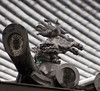Temple Roof Gargoyle