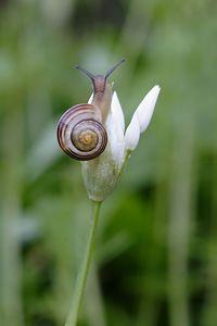 Extreme Snail
