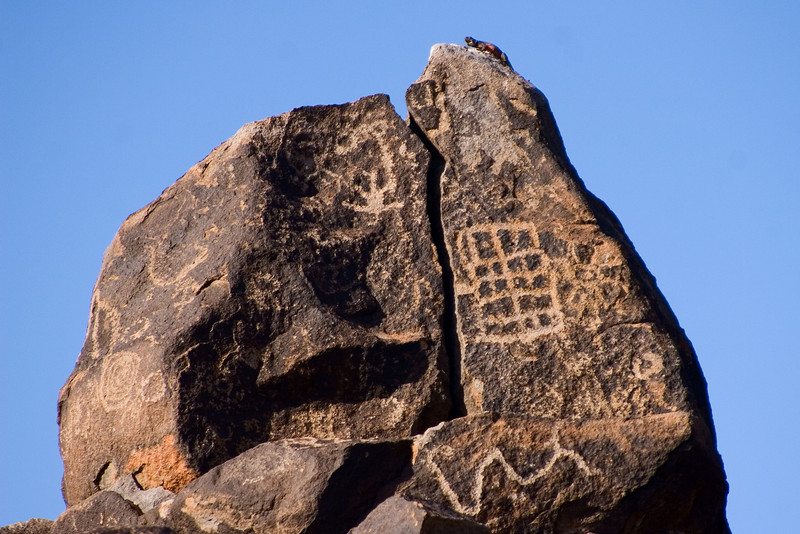 """A Lizard Basks Atop A Rock Covered In Petroglyphs  <span class=""""gg_commentary"""">Various themes appear again and again: square patterns, serpentine squiggles, lizards, spirals, and stick-figure men.</span>"""