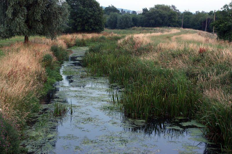 grassland reeds winding colour contrast by Jeff Arthur