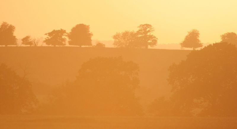 sepia trees receding silhouette by Jeff Arthur