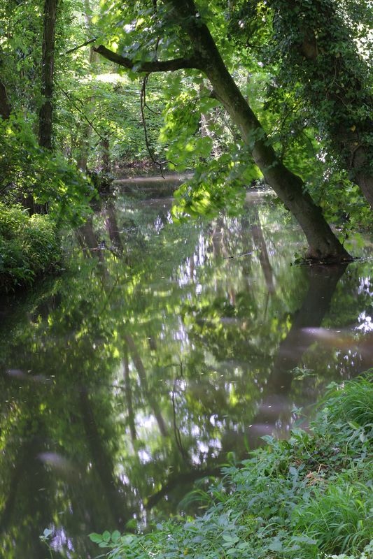 slow moving stream in sunlight reflection by Jeff Arthur