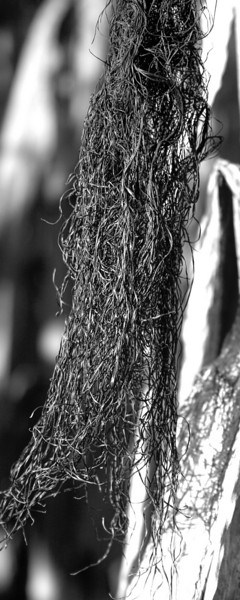 Tangled Silk