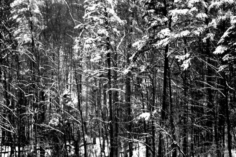 Snowy Trees, 2