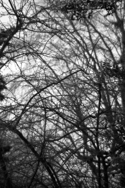 Cold Fog Trees