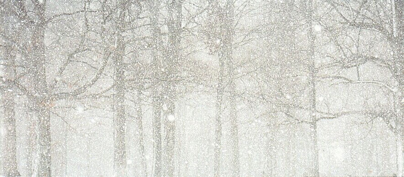 Snow Falling Through Trees