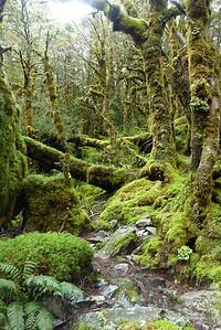Wiecej lasów