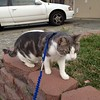 first time walk a cat, and it's dd !