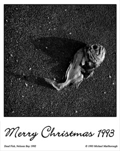 X-Mas 1993 - Dead Fish | Nelsons Bay