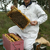 Tintinara apiarist Ben Hooper has been awarded a 2010 Nuffield Scholarship sponsored by the Rural Industries Research and Development Corporation (RIRDC) Honeybee Research and Development Program.