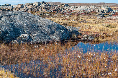 The Rocky, Boggy, Endless Tundra