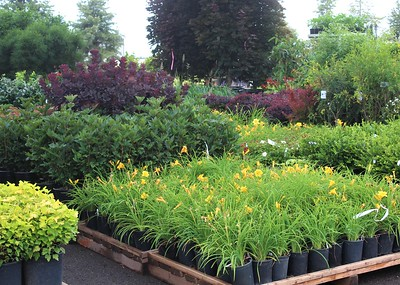 Perennials and Shrubs on the Loading Dock