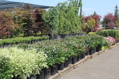 Shrubs and Trees on the Loading Dock (2)