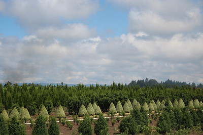 Field Grown Shrubs and Trees