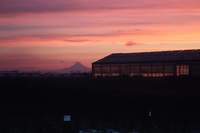 Sunrise and Mt  Hood Over the Nursery
