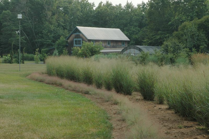 From 2000 - 2010 there was a Nursery at GUM TREE FARM.  During that time we specialized in ornamental grasses and rare and unusual plants.  At the earliest beginnings we even dabbled in landscaping, but the real desire was in propagation.