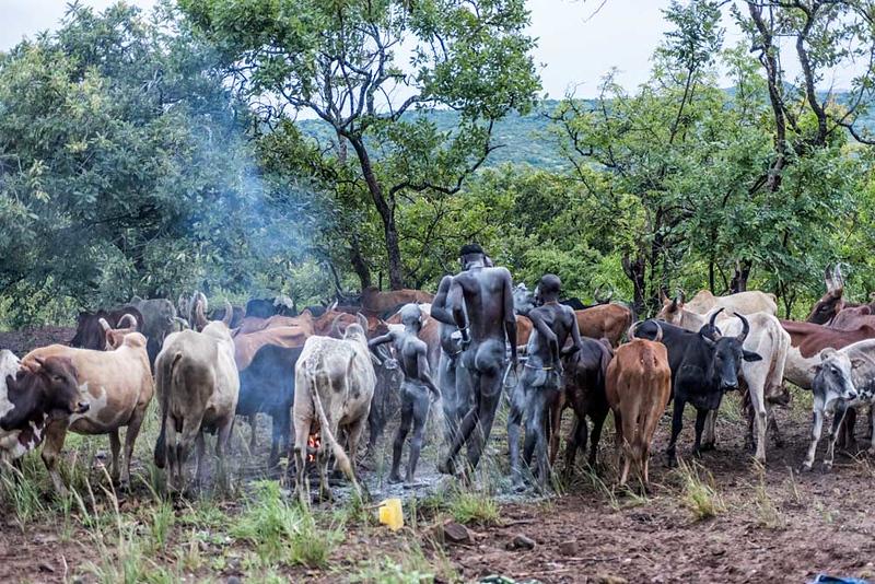 Early Morning Nyangatom Ritual