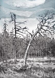 Skogsmyr, 2019, 2000,-