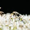 innsekt ps-9402