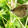 sommerfugl ps-041