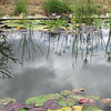 Lily and swimming pond bordering Permaculture Zone 5, the area left to Nature
