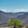 Tree and view into the valley from Hierve el Agua