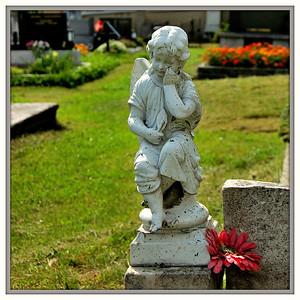 Truchlící anděl a gerbera.