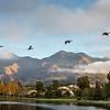 Morning Flight at Lago Santa Margarita