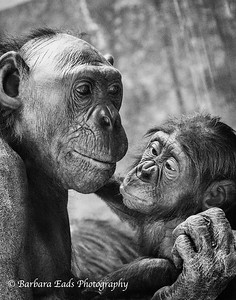 Young and Old - Barbara Eads