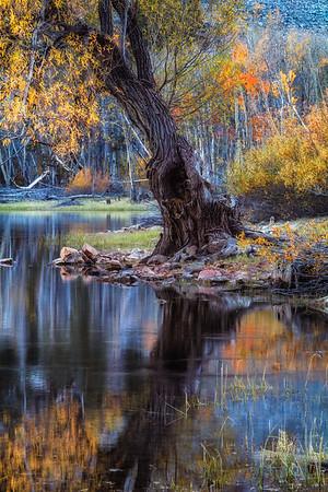 The Tree at Lundy Lake
