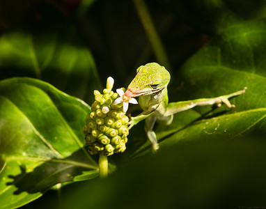 The Hungry Gecko - Second Place -by Fern Helsel-Metz