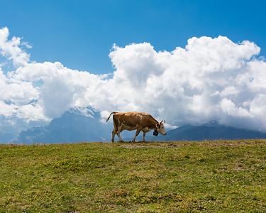 Cow Cow Boogie - Thomas Leach