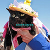 OCEAN CITY, NJ - APRIL 07: Spooky, 8 year old Cat attends the Woof N Paws event on April 7, 2012 in Ocean City, New Jersey.