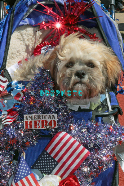 OCEAN CITY, NJ - APRIL 07: Teddy, 5 month old LhasaPoo attends the Woof N Paws event on April 7, 2012 in Ocean City, New Jersey.