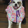 Woof N Paws Pet Fashion Show