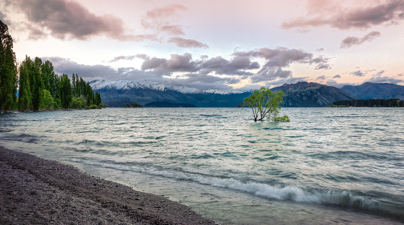 Lonely Wanaka Tree