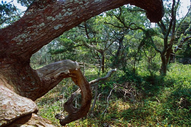 Springers Point - Ocracoke NC