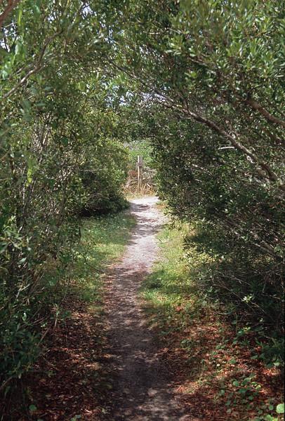 Ocracoke - Springers Point