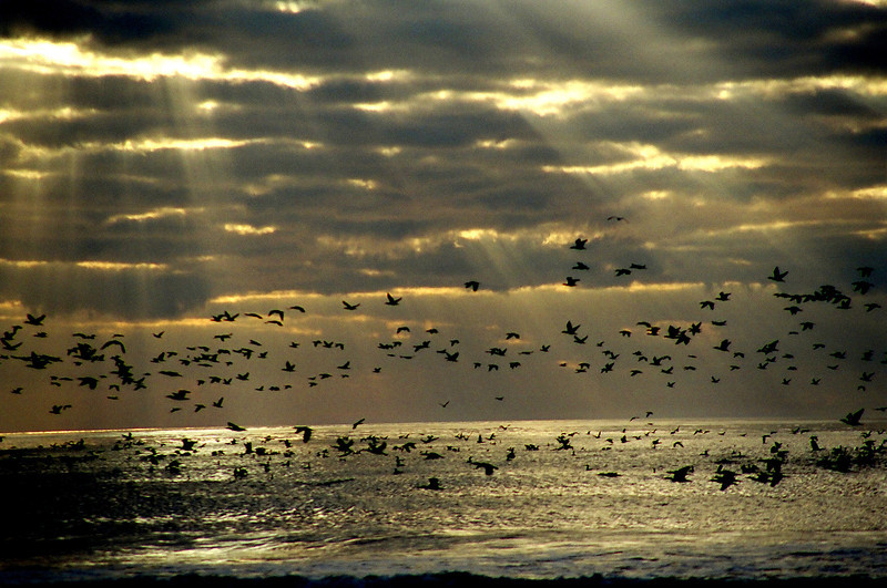 Sunrise on the Beach at Ocracoke, NC 2005