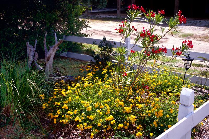 Ocracoke Gardens - Back Road on Ocracoke Island NC