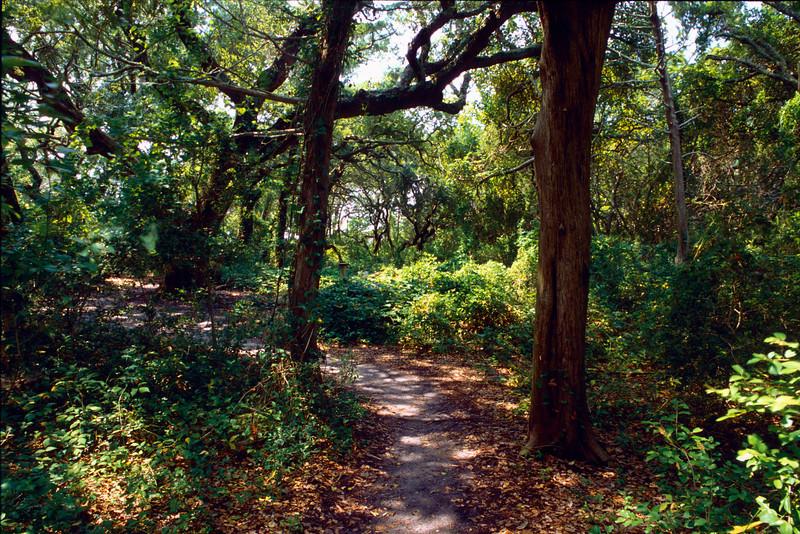 The Path to Alton's House, Crews Inn - Ocracoke