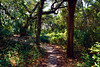 The Path to Alton's House, Crews Inn - Ocracoke