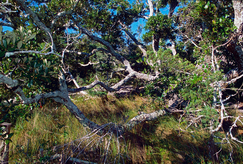 Springers Point - Ocracoke NC