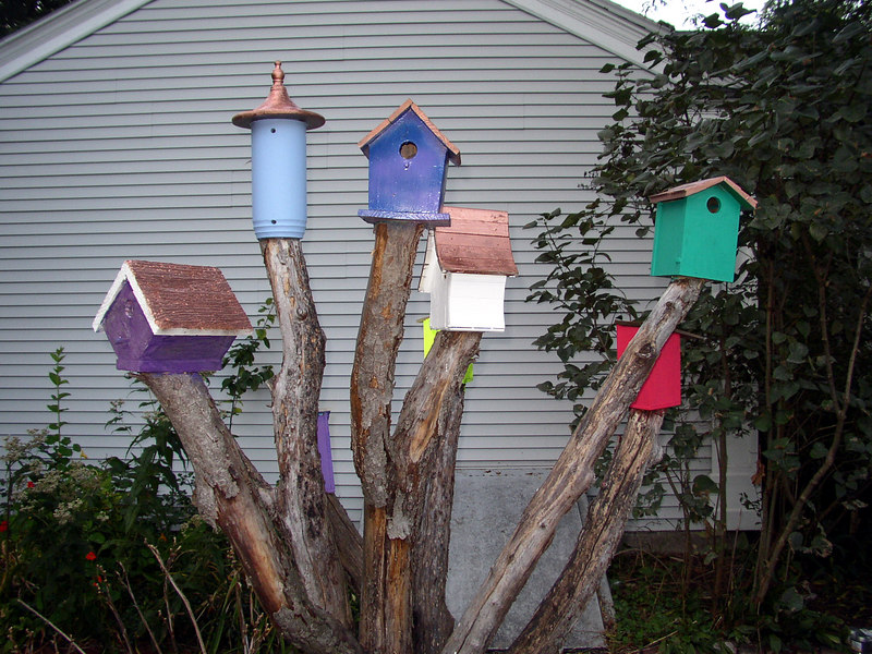 an eclectic group of 6 birdhouses on the stumps of a single tree.