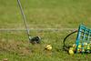 Niederösterreichische Landesmeisterschaft im Colony Club gutenhof, Himberg, Niederösterreich, Österreich am  22. 5. 2014. Foto: Gerald Fischer