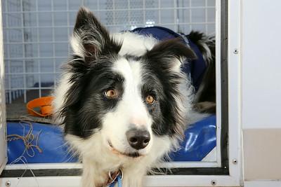 Western Australia USAR Canine Unit