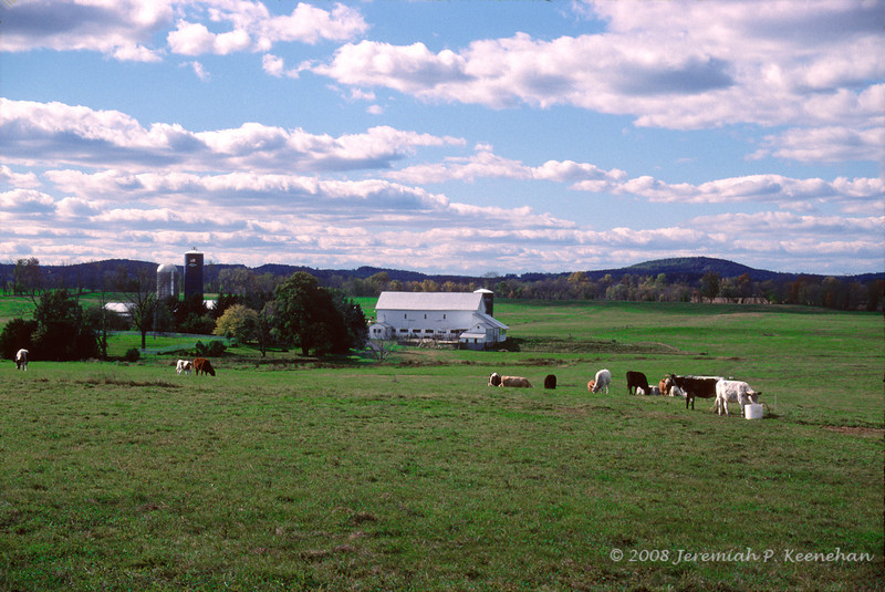 Dairy Farm Near Pleasantville