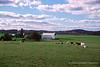 Dairy Farm Near Pleasantville