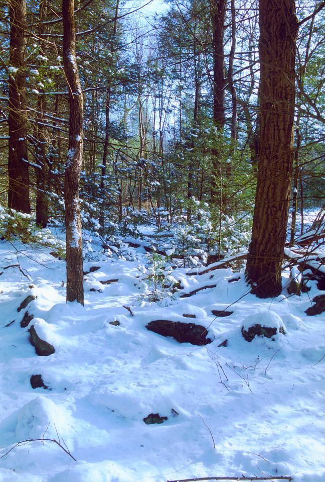 St. Anthony's Wilderness