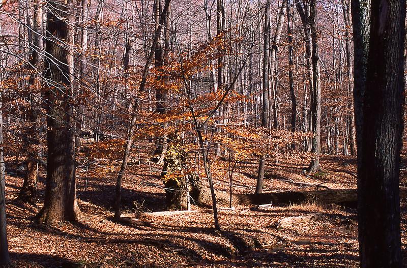 Catoctin Mountains Maryland